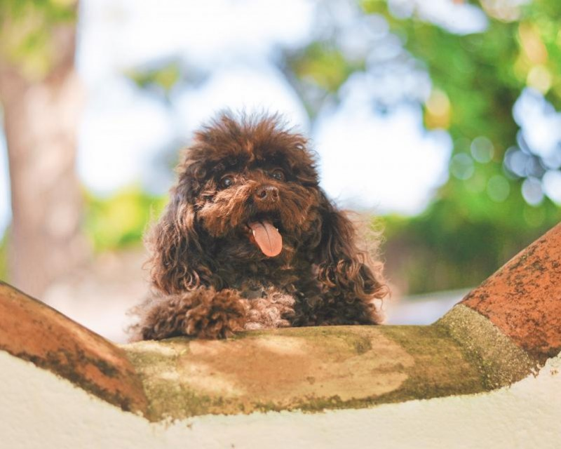1 lipca Dzień Psa w ZOO Karina