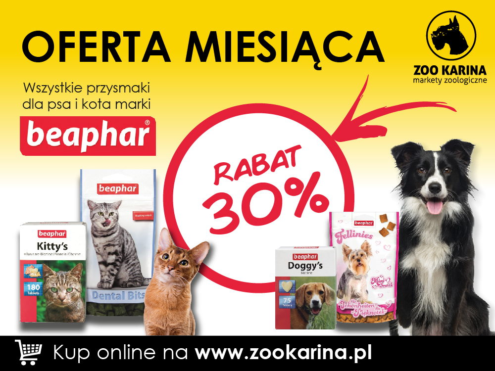 oferta_miesiaca_listopad